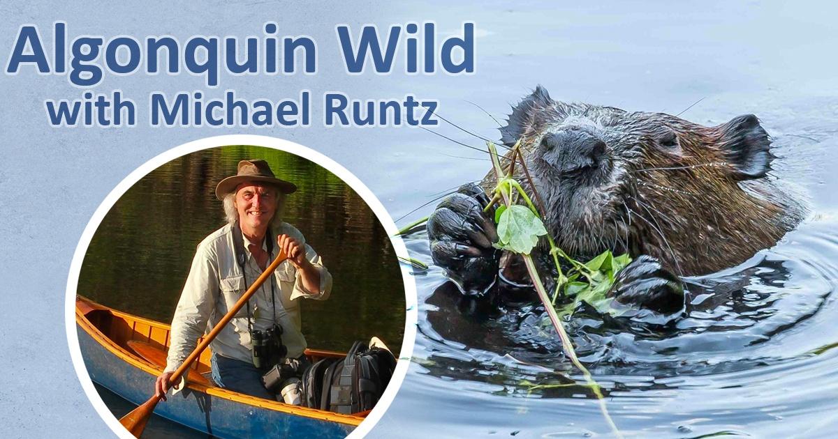 Algonquin Wild with Michael Runtz