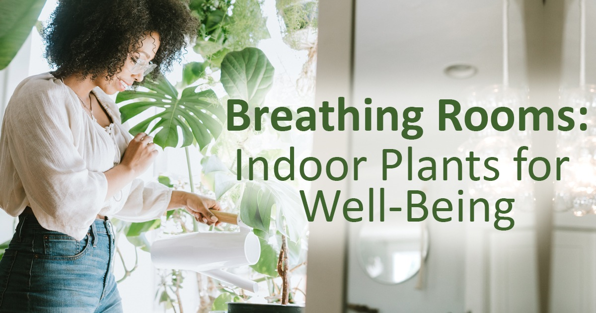 Breathing Rooms Indoor Plants for Well Being