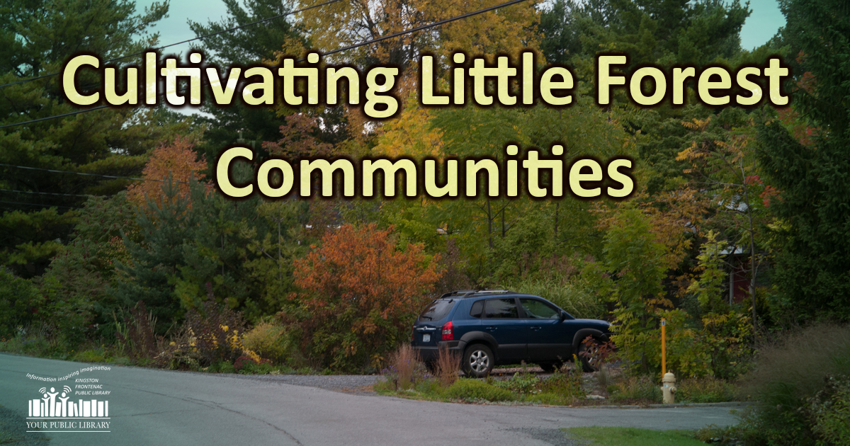 webpost image for Cultivating Little Forest Communities