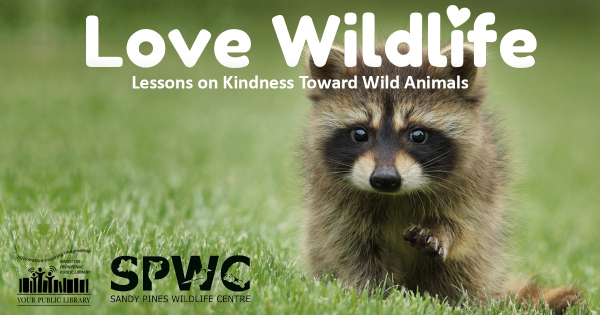 Love Wildlife Lesson on Kindness Toward Wild Animals