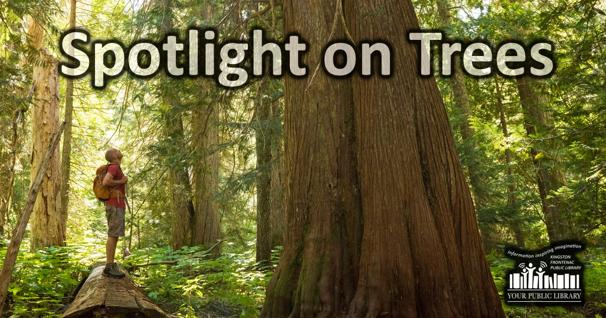 Spotlight on Trees. Image of person in a forest.
