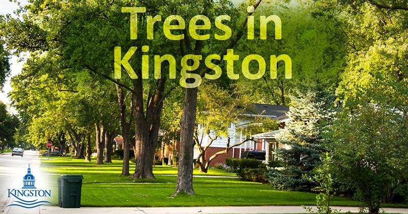 Trees in Kingston